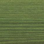 Цвет краски: 9242 Зеленая ель